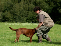 AC LRSE&C Gundog Training Day August 2009 178.jpg