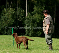 AC LRSE&C Gundog Training Day August 2009 172.jpg