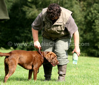 AC LRSE&C Gundog Training Day August 2009 187.jpg