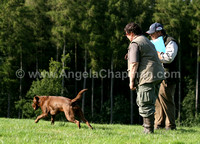 AC LRSE&C Gundog Training Day August 2009 515.jpg