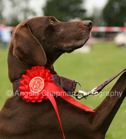 Charity Dog Shows